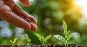 Agromax- zkušenosti - jak to funguje? - dávkování - složení
