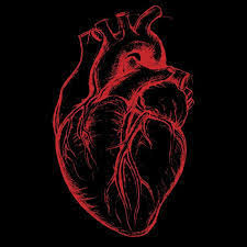 Cardiotonus- cena - hodnocení - prodej - objednat